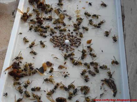 ποντικοπαγίδες, κατσαριδοπαγίδες, σφιγγοπαγίδες, εντομοπαγίδες